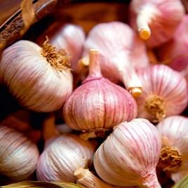 Garlic Bulbs - Edenrose