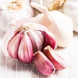 Garlic Carcassonne Wight (6)