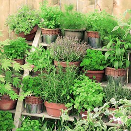 Herb Mix Our Selection (5)