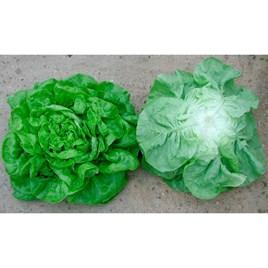 Lettuce Seeds - John