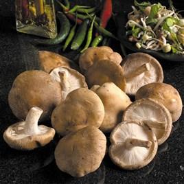 Mushroom Kit Shiitake (1)