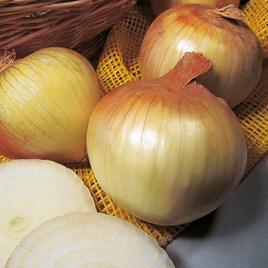 Onion Sets - Senshyu Yellow