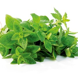 Herb Seed - Oregano