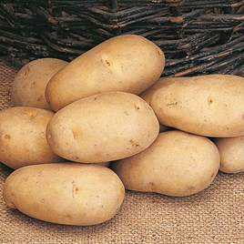 Seed Potatoes - Maris Piper