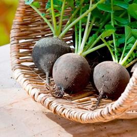 Radish Seeds - Black Spanish Round
