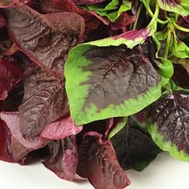 Salad Leaves Andean Superfood Mix