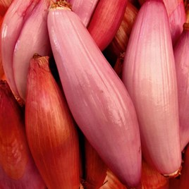 Shallot (Banana) Seeds - Simiane