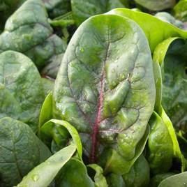 Spinach Seeds - Rubino