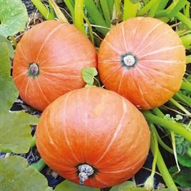 Pumpkin Seeds - Amazonka
