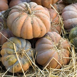 Squash Seeds - Musquee de Provence