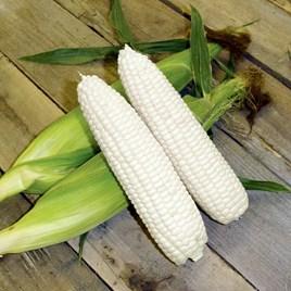 Sweet Corn - F1 Mirai White