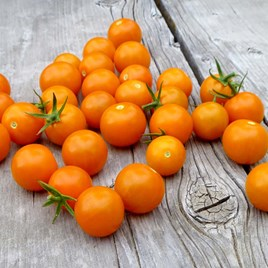 Tomato Seeds - F1 Sungold