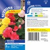 Begonia (Tuberous) Seeds - F1 Nonstop Mix