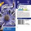 Eryngium alpinum Seeds - Blue Ice
