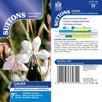 Gaura Seeds - The Bride