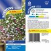 Lobelia Seeds - Cascade Mix