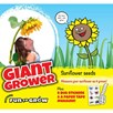 Sunflower - Giant grower (Giant Single)
