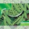 Pea Seeds - Ambassador