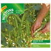 Bean (Broad) Seeds - Express