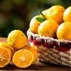 Lime (Citrus limonia) Rangpur 5 Litre Pot x 1