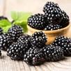 Blackberry (Rubus) Thornless Evergreen 3L Pot x 1