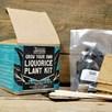 Liquorice Kit with GYO Plant