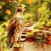 Deluxe Metal Hawk
