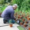 Great Dixter Planting Spade, 42cm Ash Handle