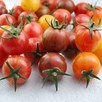 Tomato Bumble Bee Collection (3)