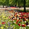 Bumper Spring Bulbs - Collection