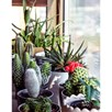 Houseplant Seeds - Urban Cactus Collection