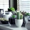 Houseplant Seeds - Urban Cactus Collection