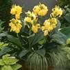 Canna Cannova Yellow 2Ltr