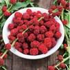 Strawberry Sticks (Chenopodium) Seeds
