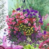 Bumper Basket Super Plug Plants - Collection