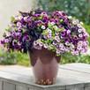 Colour-themed Collection - Purple Rain