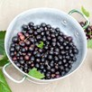 Blackcurrant Plant - Ebony (1)