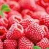 Raspberry Plant - Autumn Bliss (12)