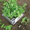 RHS Plug Plant Trainer Propagator