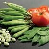 Bean (Broad) Seeds - Listra