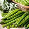 Bean (Broad Bean) Seeds - Aquadulce Claudia
