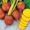 Beetroot Seeds - Burpees Golden