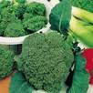 Broccoli Seeds - F1 Sakura