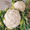 Cauliflower Seeds - Snowball A