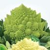 Cauliflower Seeds - Romanesco White and Green