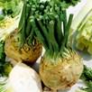 Celeriac Brilliant (18)
