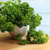 Parsley Seeds - Grune Perle