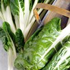 Beet (Leaf) Seeds - Silver or Sea Kale