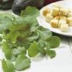 Garlic Kale Seeds