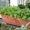 Speedy Veg Seed - Leaf Salad Spicy Oriental Mix
